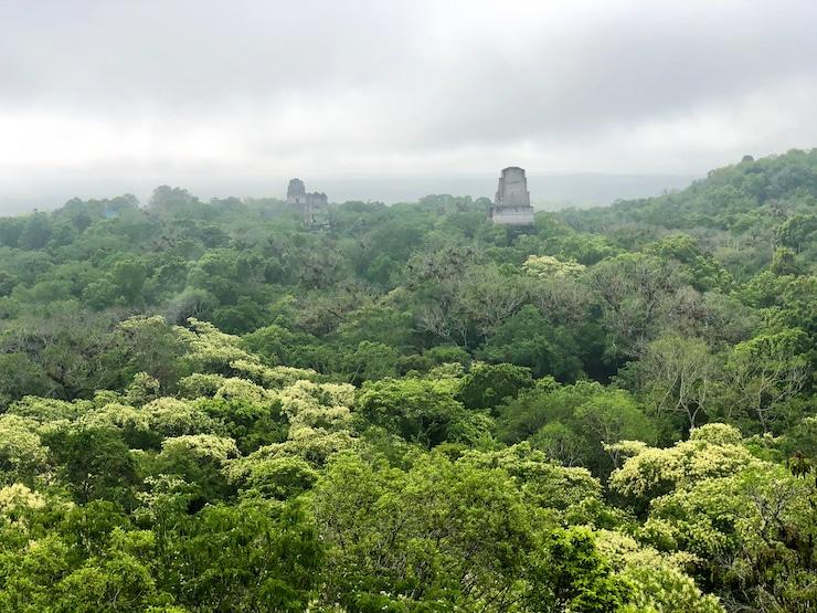 Tempel IV Tikal Aussicht