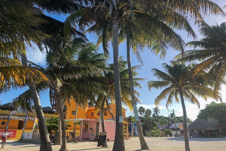 Palmen und bunte Häuser auf Caye Caulker