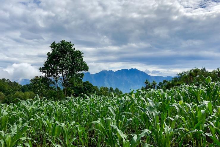 Plantagen in Guatemala